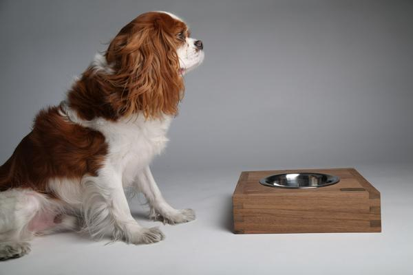 Cavalier King Charles Spaniel with stainless steel dog water bowl