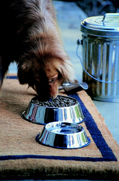 stainless steel dog bowl that cannot be tipped over
