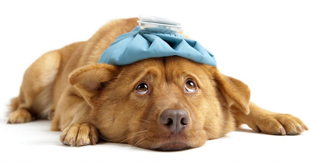 sick dog needs elevated dog feeder